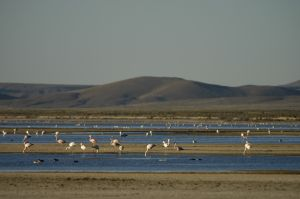 "The ""Laguna de Pozuelos"", flamingoes, on the Andean Altiplano"