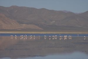 The Laguna de Guayatayoc, flamingoes